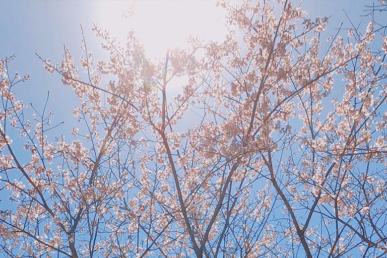 春をお届け(^^)/